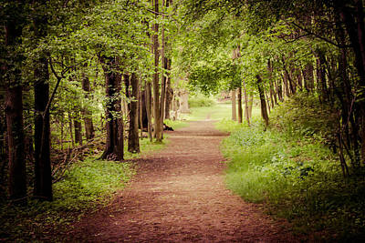 Photograph - Woodland Trail by Sara Frank