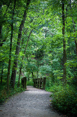 Art Print featuring the photograph Woodland Trail by Wayne Meyer