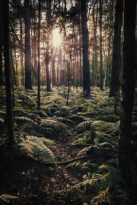 Forest Photograph - Woodland Trees by Amanda Elwell