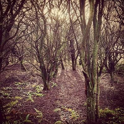 Woodland Photograph - Woodland Trees by Natalie Threadingham