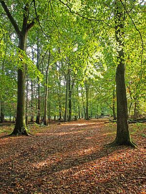 The Pathway Photograph - Woodland Walk 1 by Gill Billington