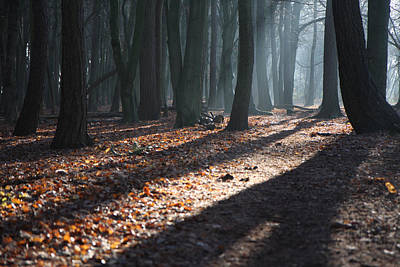 Fangorn Forest Photograph - Woodland Walk by Mike Allison