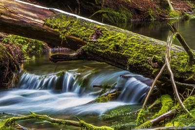 Photograph - Woodland Waterfall by Albert Seger