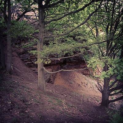 Woodland Photograph - Woodlands by Liam Daly