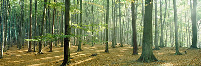 Woodlands Near Annweiler Germany Art Print by Panoramic Images