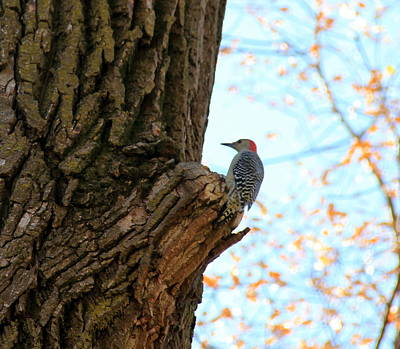 Photograph - Woodpecker by A K Dayton