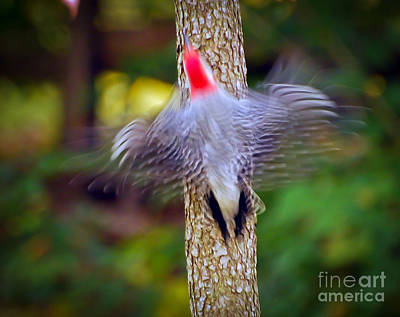 Beach House Signs - Woodpecker In Motion  by Kerri Farley