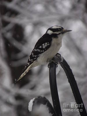 Photograph - Woodpecker by Michelle Welles
