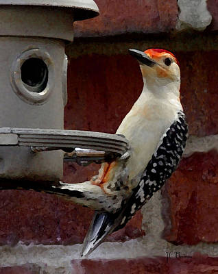 Photograph - Woodpecker Red Bellied by James C Thomas