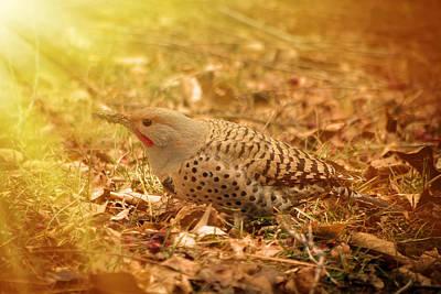 Photograph - Woodpecker Seeking Breakfast by Greg Collins