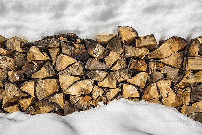 Photograph - Woodpile by Maurizio Bacciarini
