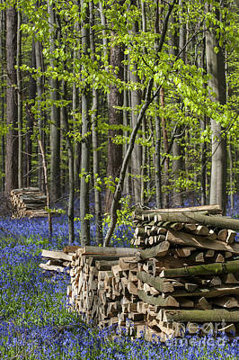 Photograph - Woodpiles by Arterra Picture Library