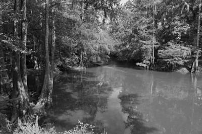 Photograph - Woods Along Lynches River Greyscale by MM Anderson