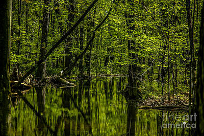 Photograph - Woods And Reflection by Ronald Grogan