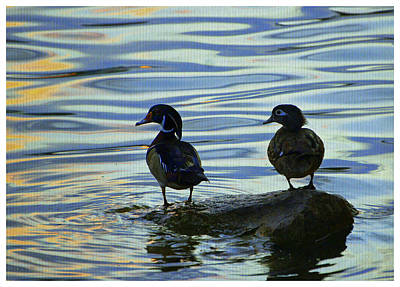 Photograph - Woods Ducks At Sunset by Laurie Perry