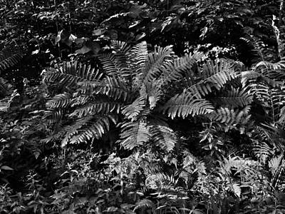Wood's Ferns  Art Print