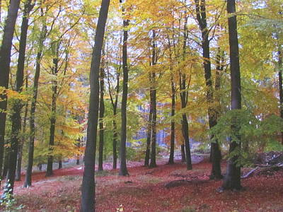 Photograph - Woods In Autumn by Joyce Woodhouse