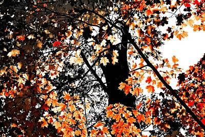 Photograph - Woods In Orange by Sheryl Thomas