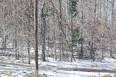 Photograph - Woods In Snow by Donna G Smith