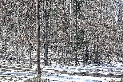 Photograph - Woods In Snow II by Donna G Smith
