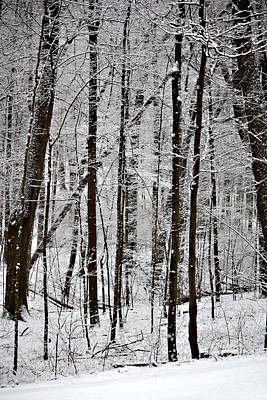Photograph - Woods On A Snowy Night by Penny Hunt