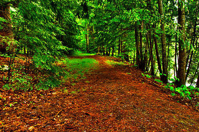 Photograph - Maine Woods Path by Glenn Gordon