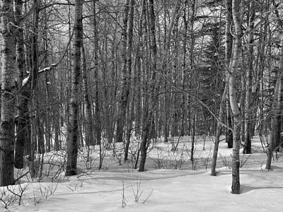 Photograph - Woods Scene 1 by Gene Cyr