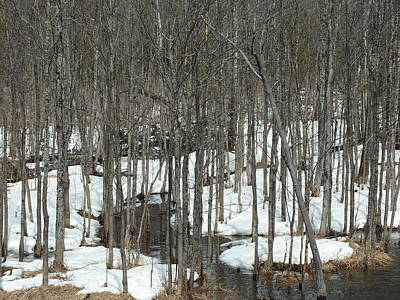 Photograph - Woods Thawing by Gene Cyr