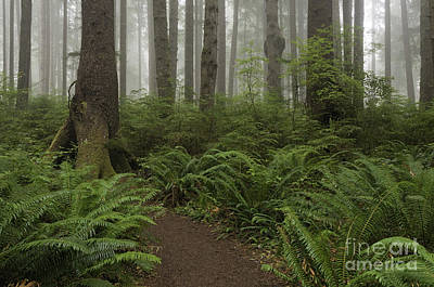 Photograph - Woods Trail by Sharon Seaward