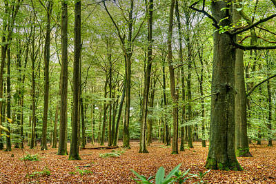 Photograph - Woods by Uri Baruch