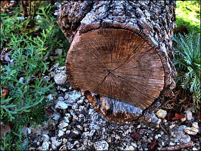 Photograph - Woodscape 2009 by Glenn Bautista