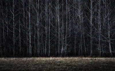 Photograph - Woodsedge by Mark Fuller