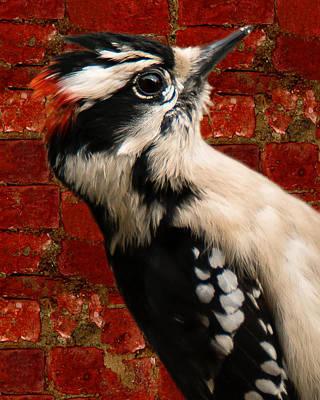 Photograph - Woody Profile by Robert L Jackson