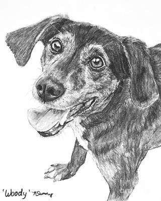 Drawing - Woody The Happy Hound by Kate Sumners