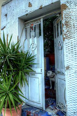 Photograph - Woofie Welcome by Deborah Smolinske