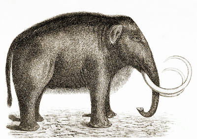 Photograph - Woolly Mammoth by British Library
