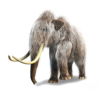Prehistoric Digital Art - Woolly Mammoth, White Background by Leonello Calvetti
