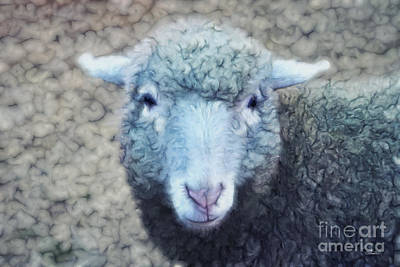 Photograph - Wooly And Cuddly by Jutta Maria Pusl