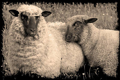 Photograph - Wooly Love by Jennifer Wright