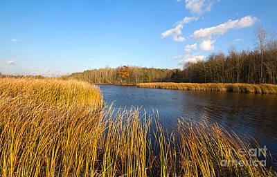 Autumn Photograph - Wooshing Reeds by Barbara McMahon