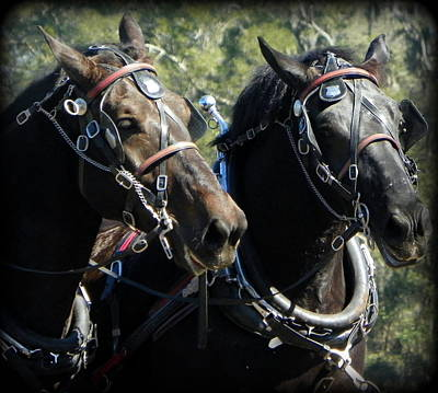 Photograph - Work Horses 1 by Sheri McLeroy