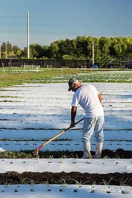 Worker On An Organic Farm Art Print