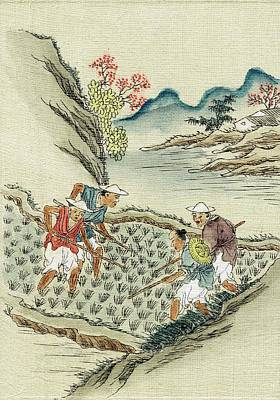 Workers Cultivating Rice In A Paddy Field Print by Universal History Archive/uig