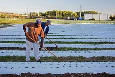 Workers On An Organic Farm Art Print