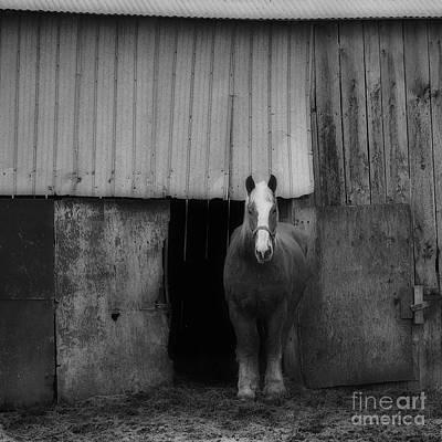 Photograph - Workhorse by Joshua McCullough