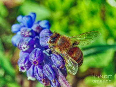 Photograph - Working Bee by Peggy Franz
