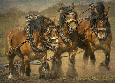 Draft Horses Photograph - Working Class by Gigi Embrechts
