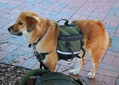 Saddlebag Photograph - Working Dog by Suzanne Gaff