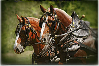 Draft Horses Digital Art - Working Girls by Posey Clements