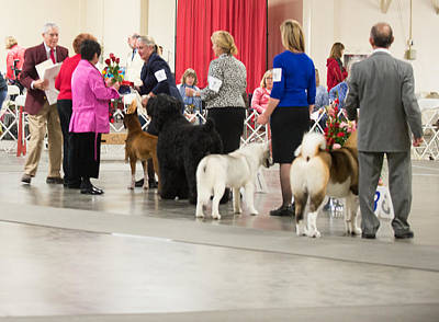 Working Group Winners 2-1-15 Original by Dog Show Video